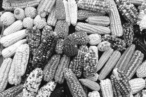 Alerta ante una nueva ley de semillas