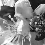 Preocupa la pérdida de colmenas en la Argentina