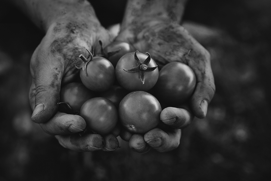 rulli soberania alimentaria