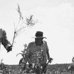 Los yuyos que perdieron su libro: herbario teatral