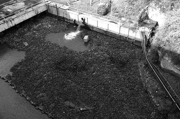 atanor Ong Proteccin Ambiental del Rio Parana