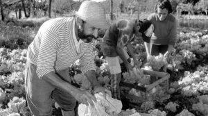 Presupuesto 2017: le quitan fondos a la Agricultura Familiar