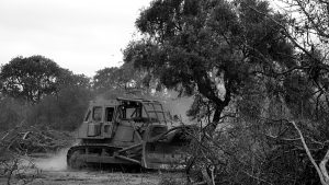 Alerta Roja: avanzan modificaciones a la Ley de Bosques