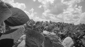 Tres empresas con el poder de la industria agroalimentaria