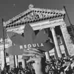 Diputados debate proyecto consensuado para el cannabis medicinal