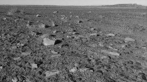 Desierto con factor humano