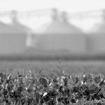 Alemania aprobó ley que prohíbe cultivos transgénicos
