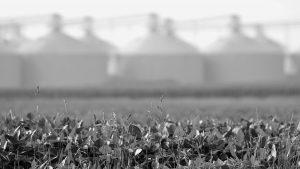 ¿La soja emitirá tantos gases como el transporte?