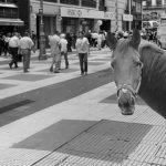 """""""El periodismo es un caballo caminando por la peatonal"""""""