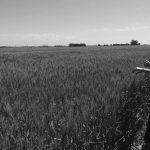 """""""Salir del 'agronegocio' implica un cambio de estructuras mentales profundas"""""""