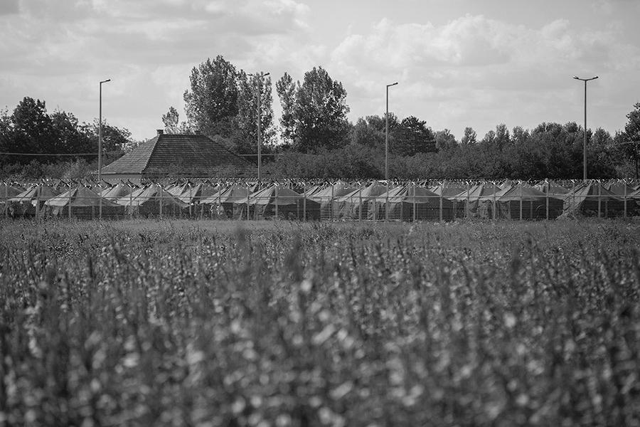 Campo de refugiados en Roszke, Hungria, en la frontera con Serbia.  El campo estaba rodeado por una valla con alambre de espino y vigilado por policias con perros.  Roszke. Hungria. Olmo Calvo. 06/09/2015
