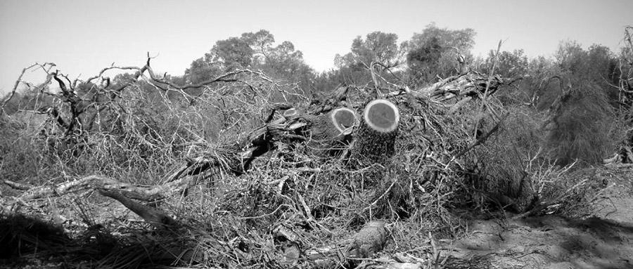 bosque-cordoba-ley-topadora-desmonte