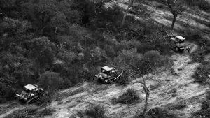 Nuevos avances contra los bosques nativos de Córdoba