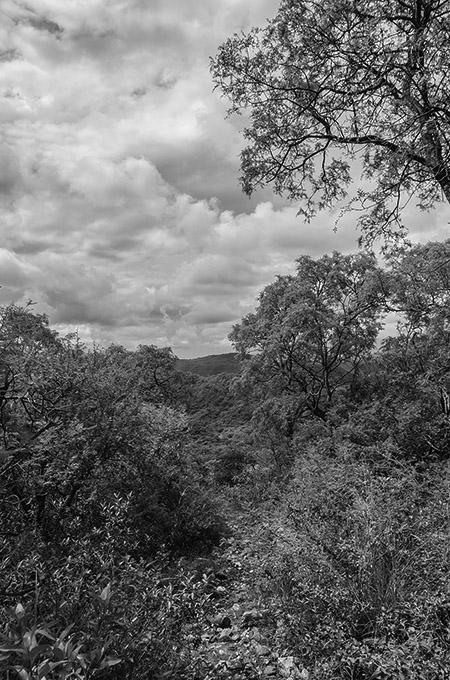 bosque-reservas-cordoba-ley-topadora-desmonte