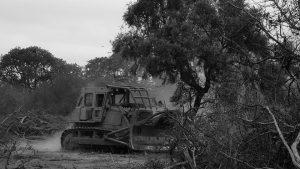 Vecinxs de Punilla fueron atacadxs y golpeadxs por enfrentar un desmonte ilegal