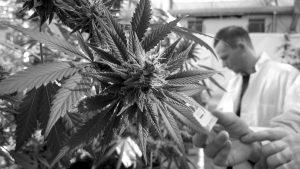 Finalmente, Argentina tiene su primera ley de Cannabis medicinal