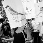 Córdoba: sin bosque nativo ni profesionales que lo cuiden