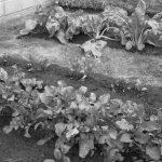 Huertas familiares en patios