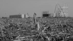 Ecosistemas cordobeses: desaparecidos en democracia