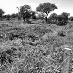 Desmonte, despojo y desolación en la serranía cordobesa