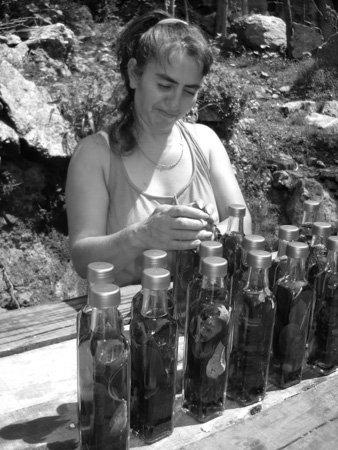 Medicina-natural-monte-nativo-01