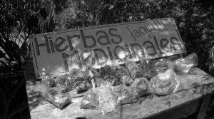La farmacia en el monte: Etnobotánica y medicina