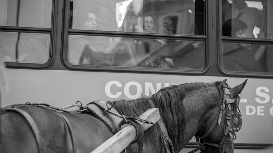 animalistas-0-proteccionistas-carreros-vida-precaria