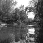 Detectan agrotóxicos en el 81% de los peces del arroyo Pergamino