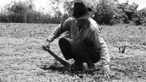 Sólo el uno por ciento de propietarios ocupa el 80 por ciento de las tierras de Colombia