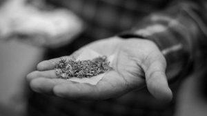 La ONU afirma que no hay ni una muerte por consumo de marihuana
