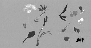 ntqa-plantas-nativas-libro