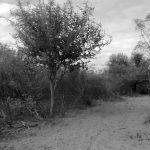 Entre preservar y explotar: loteos y desmontes en la Reserva Arqueológica Quilpo