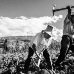 Chile: a 50 años de la Reforma Agraria