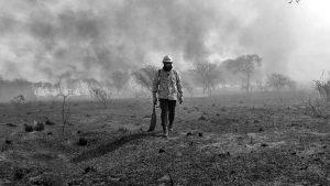 El día después, ¿qué debemos hacer tras un incendio forestal?