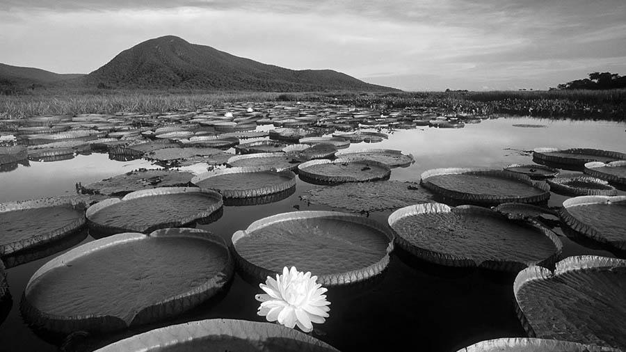 acuifero-guarani-flora-agua-guerras