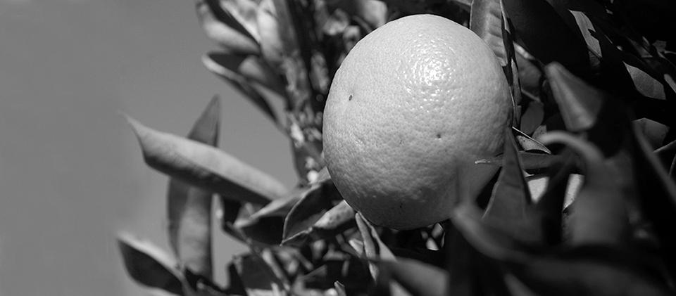 mandarina-agrotoxicos-corrientes