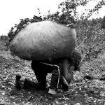 Misiones: trabajadores de la yerba mate denuncian amenazas de muerte