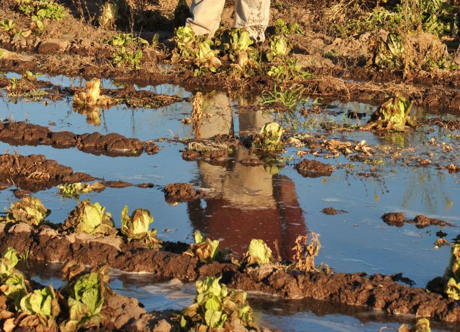 Agroecologico Coop San Carlos 03