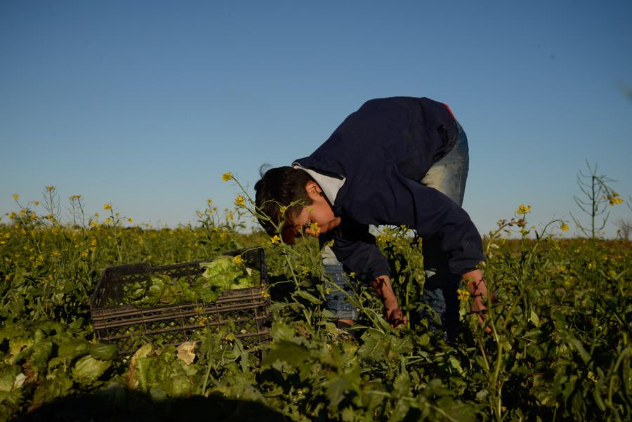 Agroecologico Coop San Carlos 05