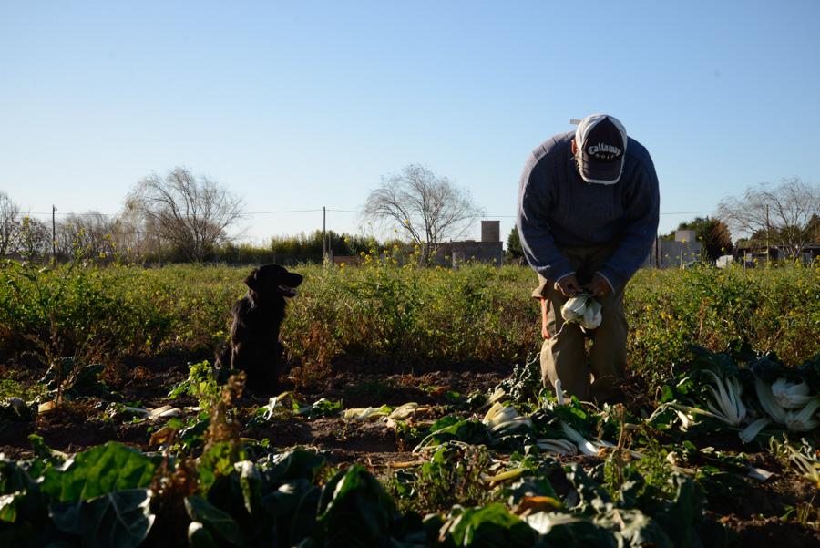 Agroecologico Coop San Carlos 09
