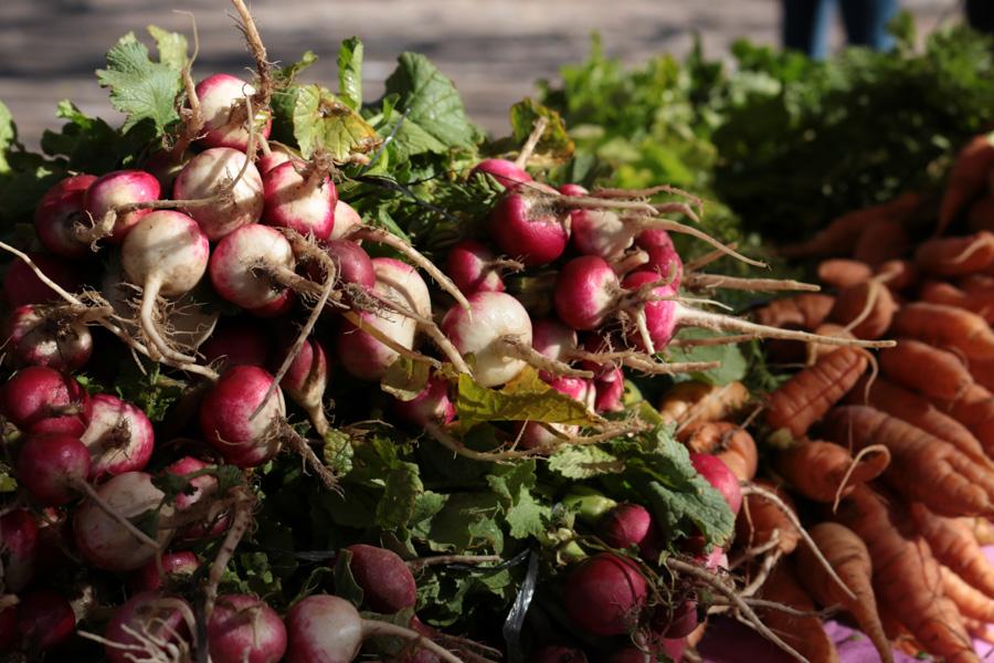Agroecologico Coop San Carlos 10