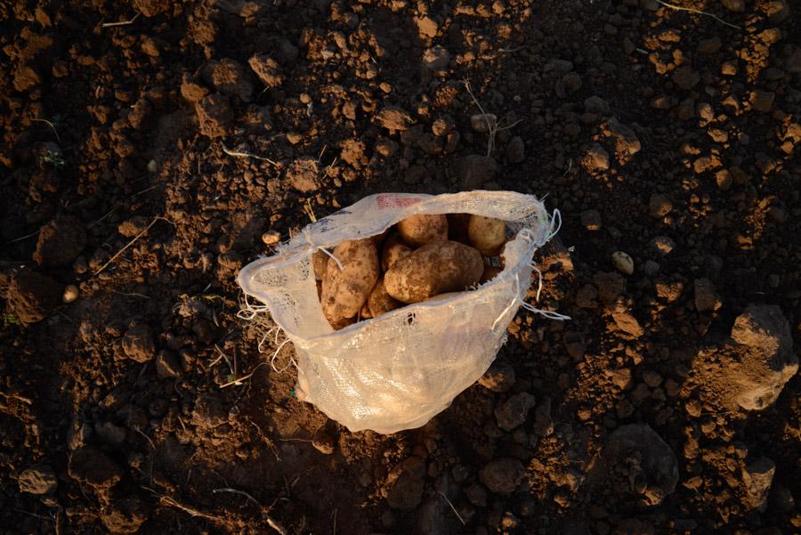 Agroecologico Coop San Carlos 11