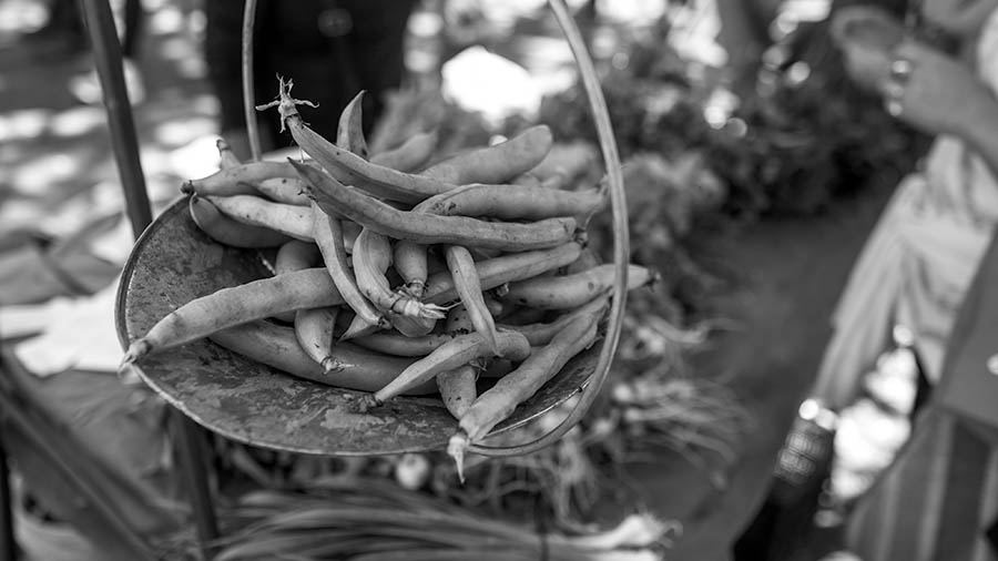 agroecologia-colonia-feria-tirolesa