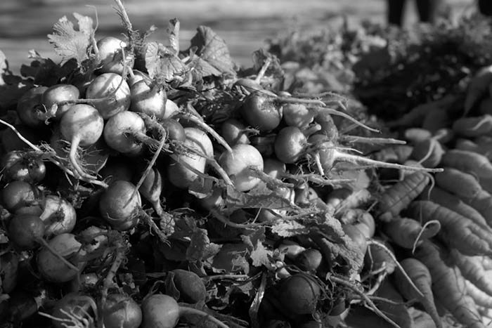 Agroecologia-Coop-San-Carlos-6