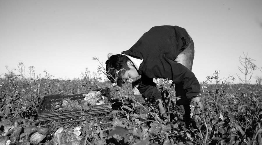 Agroecologia-Coop-San-Carlos-7
