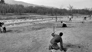 Volver sobre los errores: Cosquín reemplaza árboles exóticos por nativos