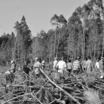 Una victoria ante el avance de la industria forestal