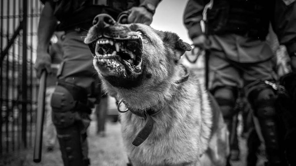 gendarmeria-policia-patricia-bullrich-represion