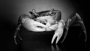 Los jueces y los crustáceos