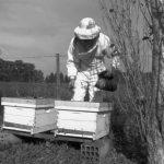 Plan estratégico para difundir los beneficios del consumo de miel y polen